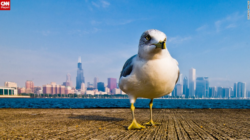 "From this angle, this <a href=""http://ireport.cnn.com/docs/DOC-800876"">seagull</a> looks like he owns Chicago."