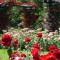 europe rose gardens lyon