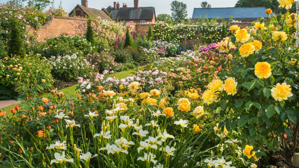 Award-winning rose breeder David Austin has been developing English roses for 50 years. His eponymous rose gardens on the Shropshire Border in the UK feature 700 varieties over two acres.