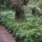 kilimanjaro - forest belt