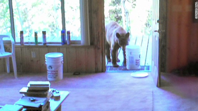 pkg bear come to breakfast_00002327.jpg