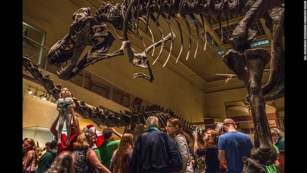 The National Museum of Natural History in Washington is the world's second most visited museum, with 8 million visitors in 2013.