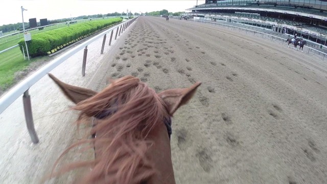 What California Chrome will see