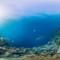 panoramic coral tubbataha reefs