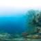panoramic coral tubbataha 2