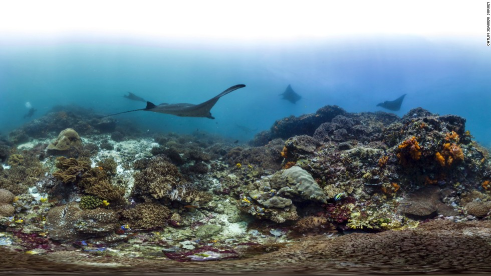 A manta ray is seen gliding through the Kmodo National Park in Indonesia. Coral Triangle Day was conceived in November 2012 and aims to bring people together to find ways to protect and conserve the area.