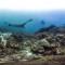 panoramic coral kmodo national park