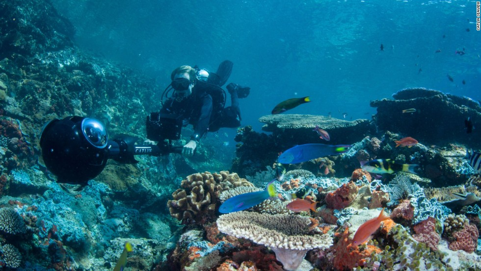 According to the Coral Triangle Initiative, the region is home to 76% of the world's known coral species. It also contains the highest reef fish diversity on the planet.