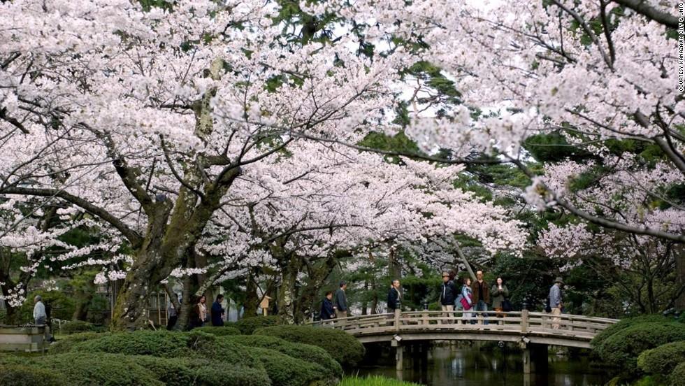 Cherry blossoms, bridges and streams are hallmarks of Kenrokuen in Kanazawa, Japan.