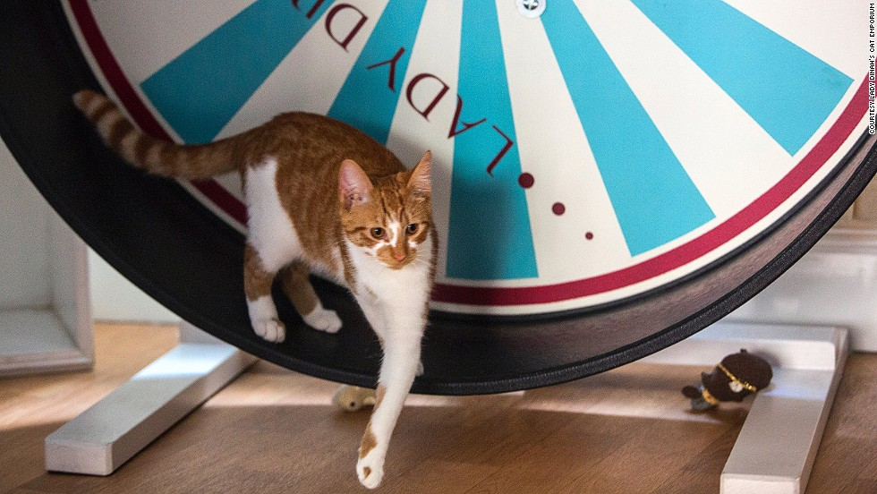 London also saw it's first cat cafe recently, with the opening of Lady Dinah's Cat Emporium. The cafe has proved incredibly popular and is booked out until October this year.