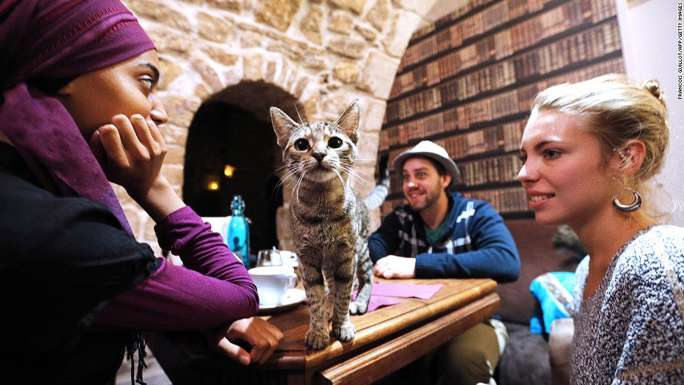 Cat cafes have moved out of Taiwan, through Japan, and now have spread across the world. This is the first cat cafe in Paris, which opened in September 2013.