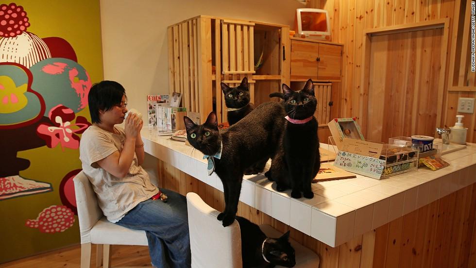Black cats only at the Cat Café Nekobayaka.