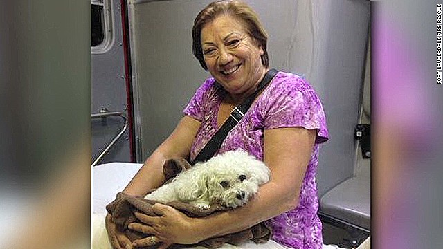 dnt dog falls fourteen stories _00005812.jpg