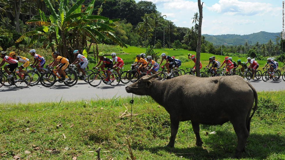 Cyclists compete Wednesday, June 11, during the Tour de Singkarak in West Sumatra, Indonesia. Amir Zargari won the event.