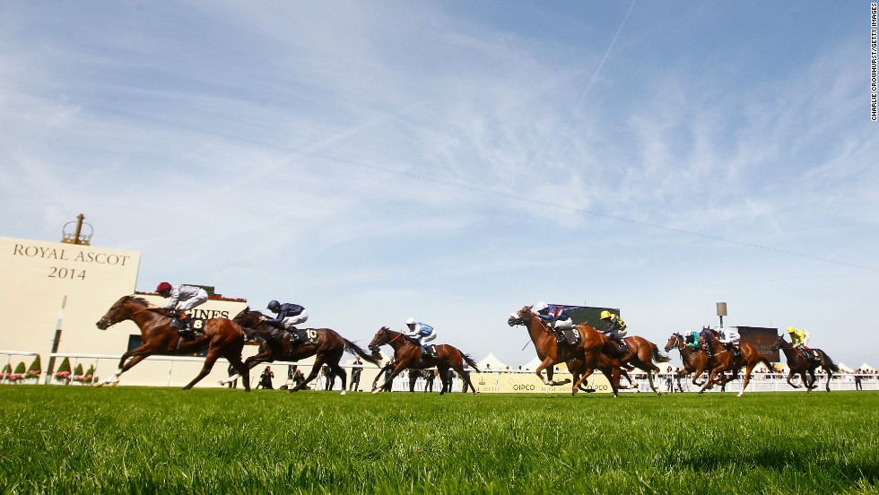 Each year as mnay as 300,000 punters converge on the affluent English village of Ascot for some spectacular racing...