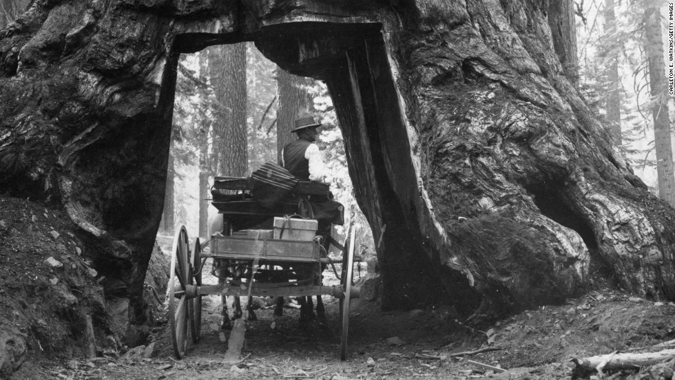 "A horse-drawn cart passes through the <a href=""http://www.nps.gov/seki/faqtunnel.htm"" target=""_blank"">Wawona Tree</a> in the Mariposa Grove, near Yosemite's South Entrance. A tunnel was cut through the tree in 1881 and remained a popular tourist attraction until it was toppled by a snowstorm in 1969."