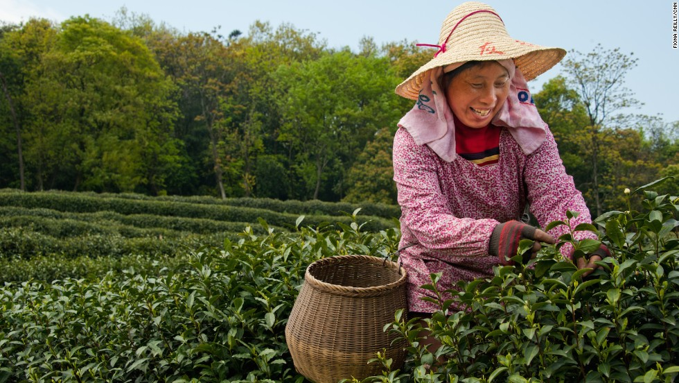 Just south of Hangzhou's West Lake, Longjing is home to China's most celebrated green tea.