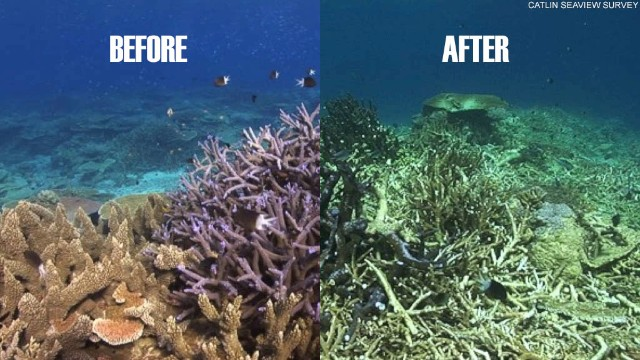 The same section of coral reef is shown before and after the    Coral Bleaching Comparison