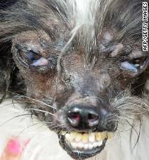 Meet Peanut the 'World's Ugliest Dog' - CNN Video