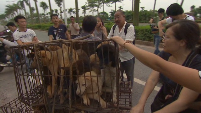Dog meat festival in China sparks outrage