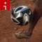 zimbabwe woman soccer irpt