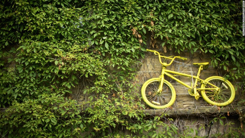 An iconic yellow bicycle mingles in between the Ivy at a cottage located at stage two of the tour in Yorkshire. The population of these towns prepare themselves to welcome the event and its athletes by decorating the routes in colored buntings and yellow bicycles.