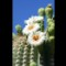 03_Arizona