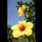 11_Hawaii