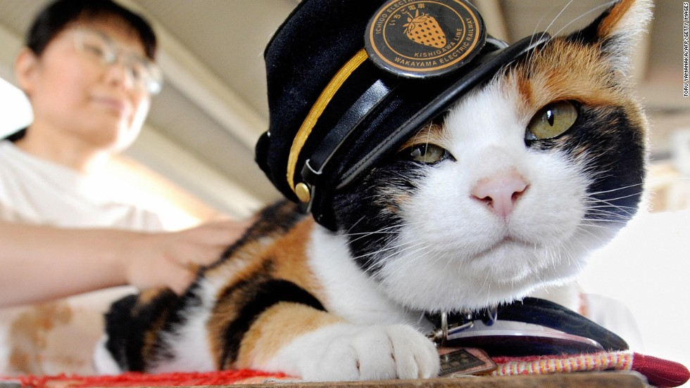A calico raised on the streets of Kinokawa, Tama pawed her way to fame and the job of station master at the small train station of Kishi in Japan.