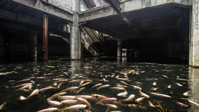 The flooded ground floor of Bangkok's abandoned New World Mall teems with fish.