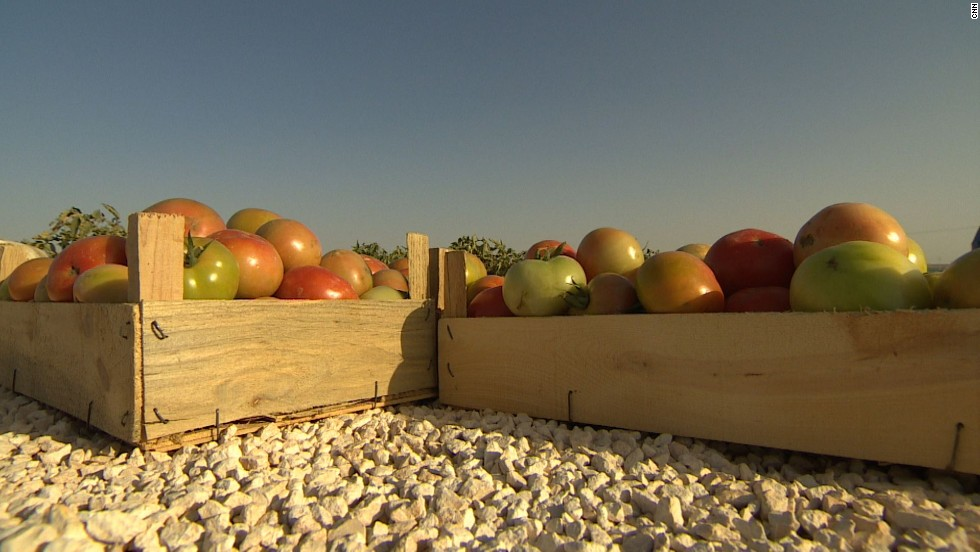 Boxes of tomatoes grown near Mafraq, Jordan. Farmers in the north of the country say the price of their produce has halved in the last year.