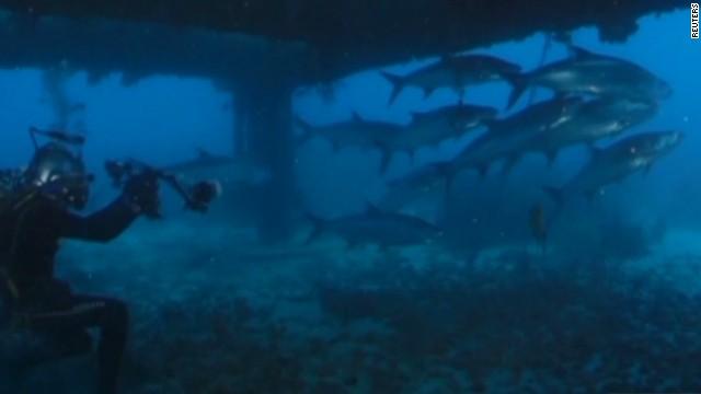 newday intv fabien cousteau underwater lab_00003511.jpg