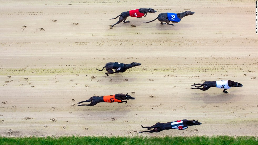 Greyhounds race Wednesday, July 2, at the Coral Romford Greyhound Stadium in Romford, England.