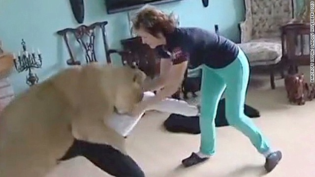 mxp lion attacks man documentary_00003819.jpg
