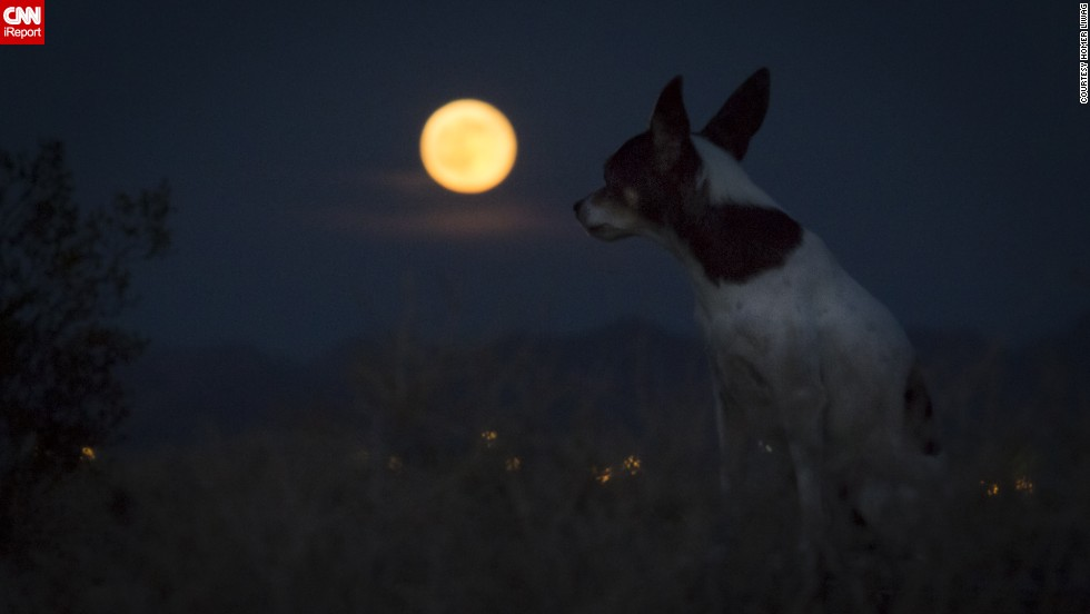"<a href=""http://ireport.cnn.com/docs/DOC-1152178"">Homer Liwag</a> and his dog Sake sat in the desert in Las Vegas, Nevada, waiting for the supermoon. ""This supermoon was striking as usual,"" he said."