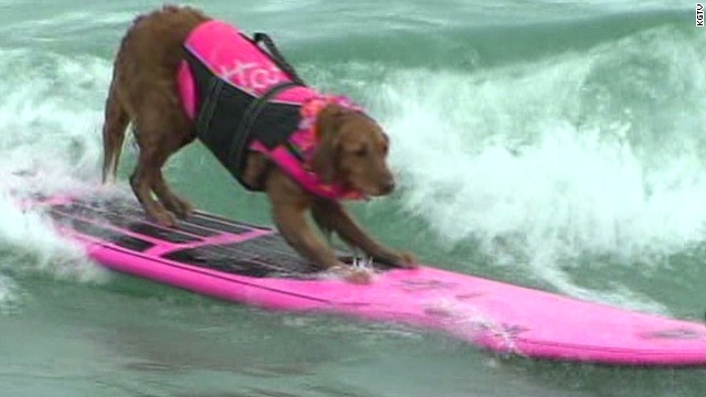 See dogs surf the waves