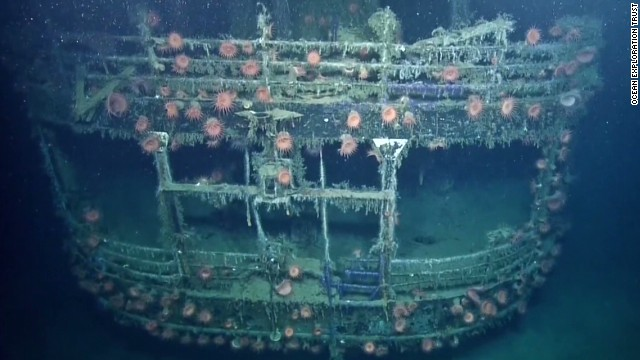 Anemones cling to the side of the SS Robert E. Lee.