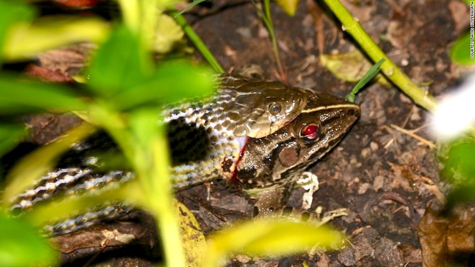 It's a snake-eat-frog world at Basunti, which sits in the middle of a nature sanctuary. Other wildlife include a leopard, mongoose, scorpions, butterflies, birds and fish.