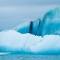 arctic surfing 8 glacier