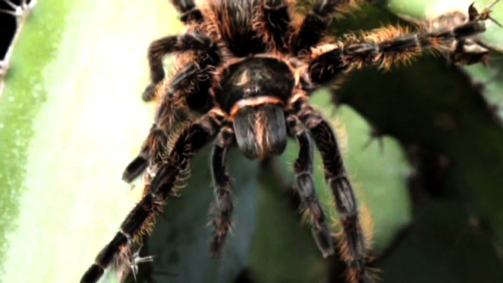 With a tarantula roaming about, Delta calls off flight