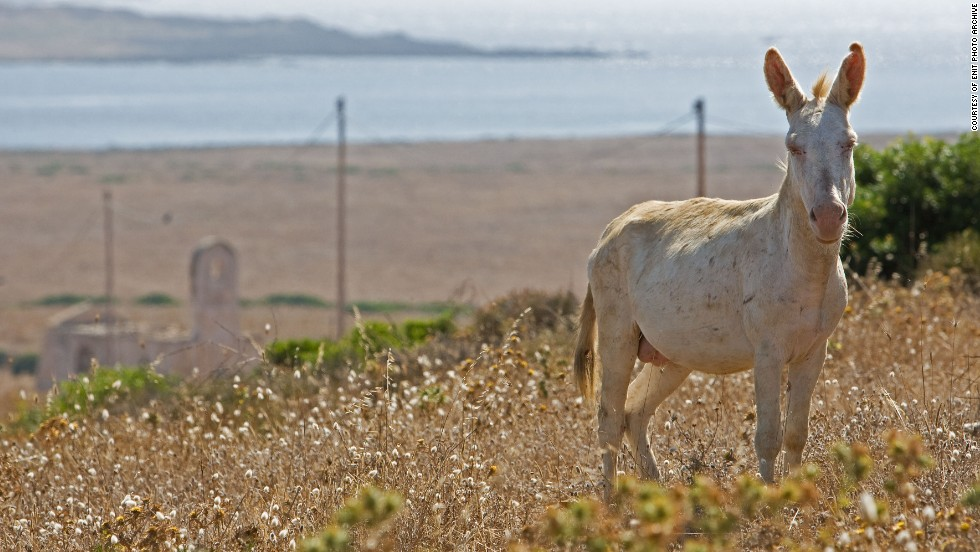 Asinara is home to 650 animal species, including wild albino donkeys which freely graze the land.