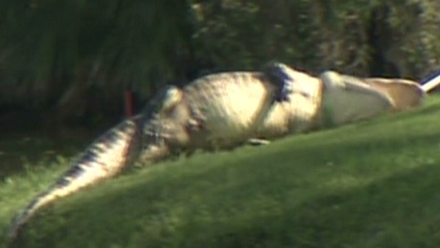 dnt 9 foot gator bites golf ball diver _00011817.jpg