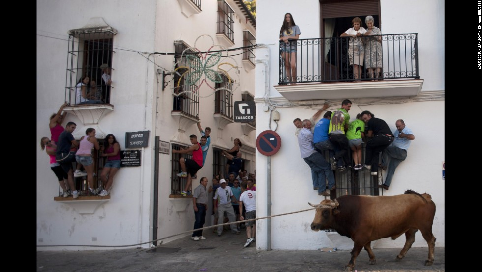 People climb onto window ledges to try to avoid a bull Monday, July 21, during the Toro de Cuerda festival in Grazalema, Spain. During the festival, a long rope restrains the bull as it runs through the village's streets.
