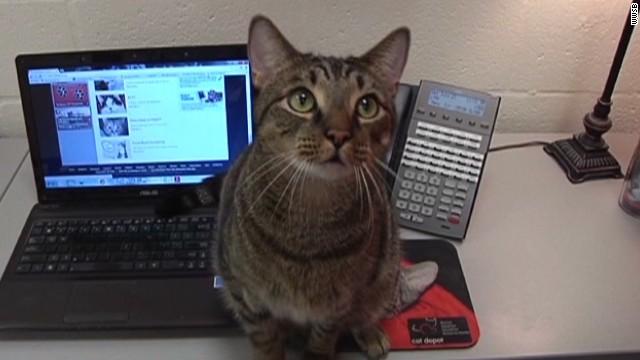 dnt fl cat calls 911 _00012430.jpg