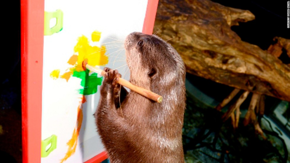 Last year, the Dubai Aquarium held an exhibit featuring otters demonstrating their artistic prowess with a paintbrush and canvas.