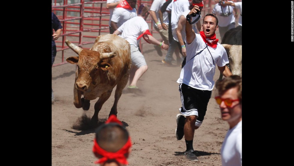 A man tries to take a selfie with a bull Saturday, July 26, during The Great Bull Run at the Alameda County Fairgrounds in Pleasanton, California.