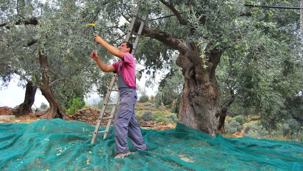Guests at the Kisterna Hotel on Elafonisos can harvest the estate's olives and grapes (with their feet), try their hand at soap making, basket weaving or fishing.