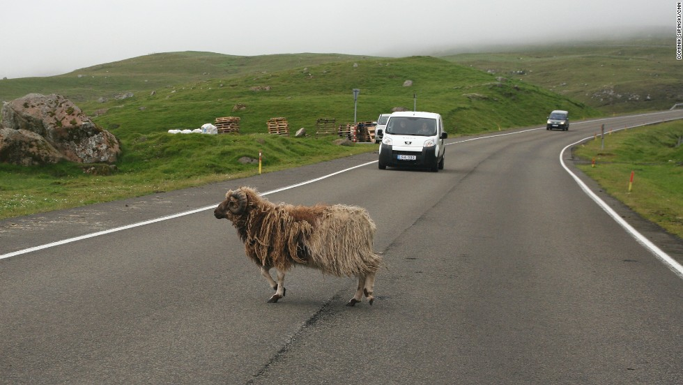 Sheep and goats are common intruders on the well maintained Faroese roads.