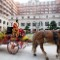 hotel amenities horse