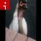 irpt birds rene governale swan bite